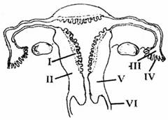 female reproductive system essay Reproductive system essays: over 180,000 reproductive system essays, reproductive system term papers, reproductive system research paper, book reports 184 990 essays.